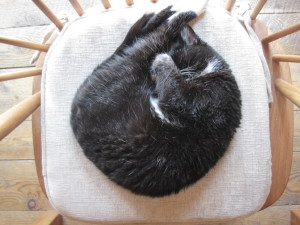 Boots loved to curl up on my chair.